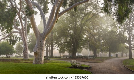 foggy morning local park gardens ghost gumtrees Melbourne