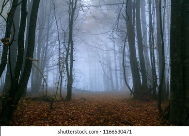 Foggy morning, magical forest road.