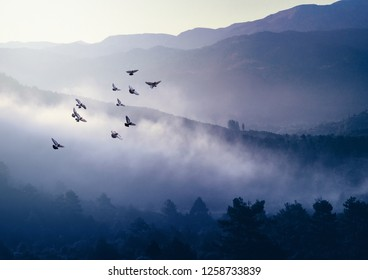 Foggy morning in the mountains with flying birds over the silhouettes of hills and treetops - serenity landscape in soft sunlight with haze at sunrise.