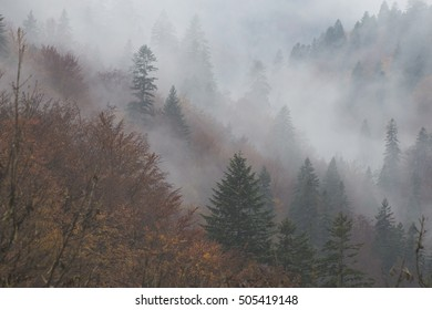 foggy morning on the Bucegi Mountain