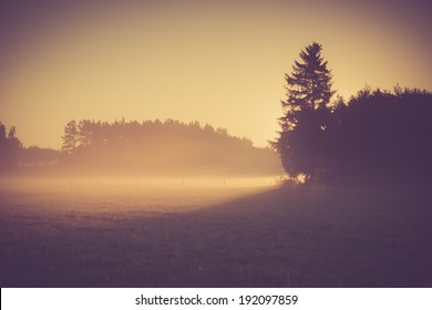 foggy morning on meadow. sunrise landscape photo with vintage effect