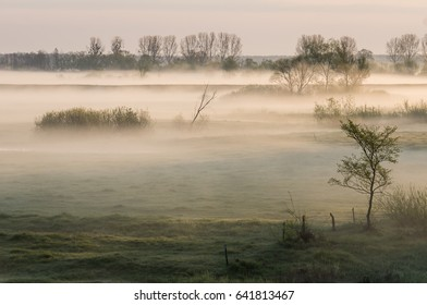 Foggy morning on a river banks at the national park in Poland