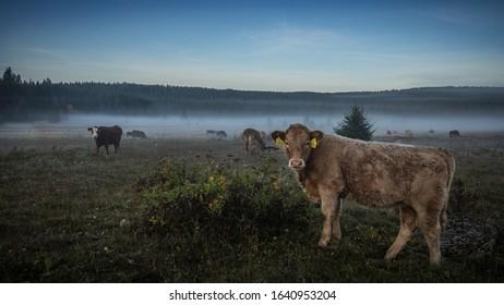 Foggy morning on Sumava meadows - Shutterstock ID 1640953204