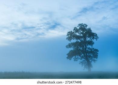 Foggy morning on the Trinity River in Dallas, Texas