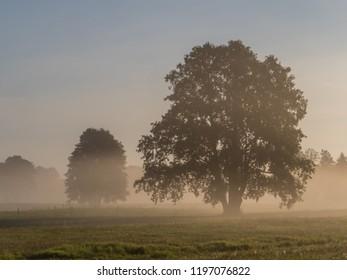 Foggy morning in Podlasie. Sunrise. Podlachia. Poland, Europe. The region is called Podlasko or Podlasze. Panoramic view.