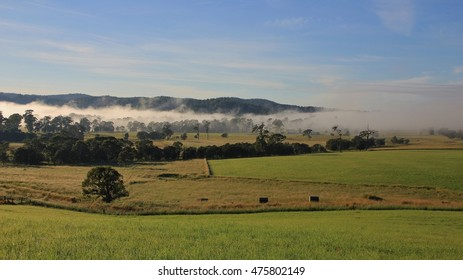 Foggy morning in rural New South Wales, Australia