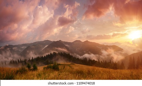 Foggy morning shiny summer landscape with mist, golden meadow and sun shining