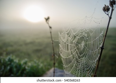 foggy morning and spider web