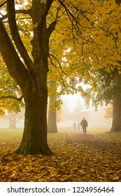 foggy morning stroll through a tree filled park in autumn time
