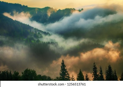Foggy morning summer mountain landscape, amazing hipster background with fir trees. Vintage toning.