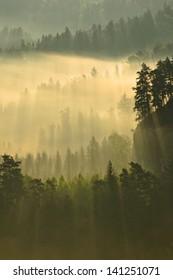 Foggy morning sun rays over tree tops