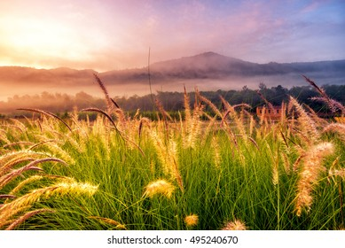 foggy morning sunny landscape with tree, grass, river and mountain