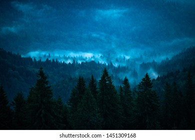 Foggy mountain forest before sunrise in dusk light Bucegi Romania