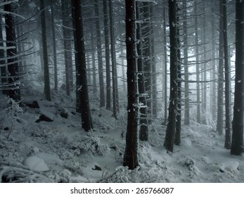 Foggy mountain forest, Karkonosze Mountains, Borowice, Poland.