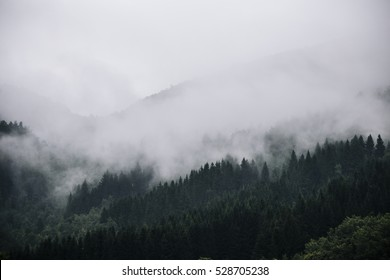 Foggy mountain forrest in Norway