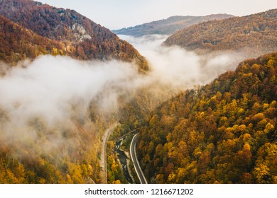 Foggy mountain highway in the middle of the forest on a cold autumn morning