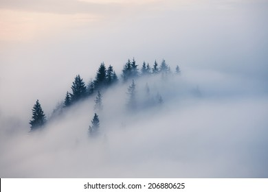 Foggy mountain landscape. Carpathian mountains, Ukraine