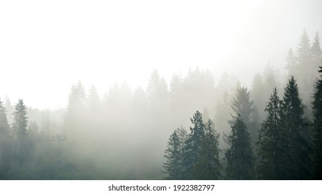Foggy mountain landscape with fir forest.