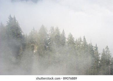 Foggy Mountain Scenery in Germany with Pine Trees