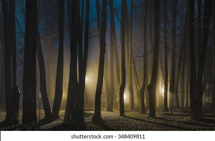 """Foggy night in late autumn. The park of Museum-Reserve """"Muranovo"""". Moscow region, Russia"""