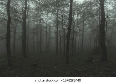 foggy Oak Forest in autumn