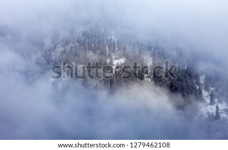foggy-over-forrest-mountain-during-450w-