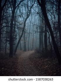 Foggy path in park Borisova Gradina Sofia, Bulgaria