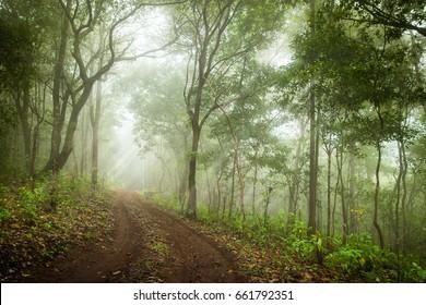Foggy rainforest in the mist, Soft focus