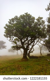 Foggy relict forest at Madeira island