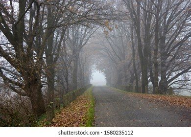 Foggy road and trees. Early morning landscape, Germany