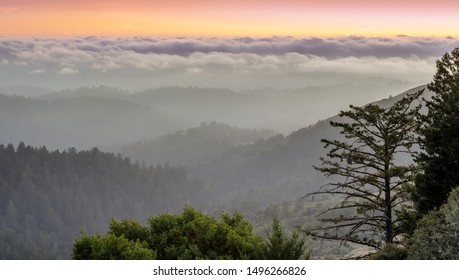 Foggy Santa Cruz Mountains above the Pacific Ocean. Russian Ridge Open Space Preserve, San Mateo County, California, USA.