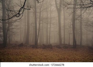 Foggy Scenery