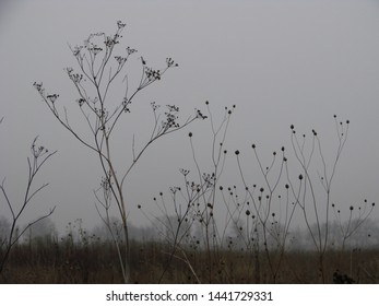 foggy scenery with dry trees and plants