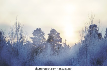 A foggy scenery to the forest during sunset. Image taken on a very cold afternoon. Image has a vintage effect applied.
