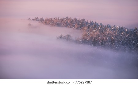 Foggy and snowy forest