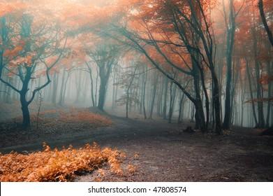 Foggy Spooky Autumn Forest