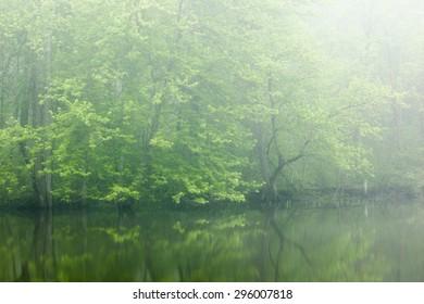 Foggy, spring landscape of the Kalamazoo River, Michigan, USA