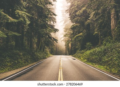 Foggy Straight Redwood Highway in Northern California, United States - Shutterstock ID 278206469