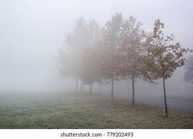 Foggy street on winter