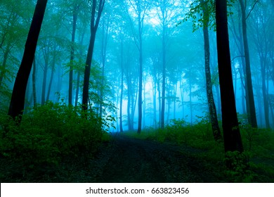 Foggy summer day into the forest