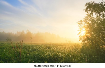Foggy summer landscape with large meadow and sun shining through the tree branches