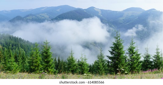 Foggy summer morning in the mountains hills valley. Panorama with mountains and trees.