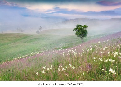 Foggy summer morning in the mountains. Lonely tree among a fields of flowers.