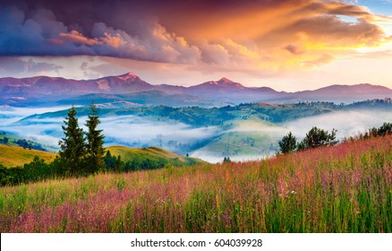 Foggy summer sunrise in the Carpathian mountains. Colorful morning scene in the mountain valley. Beauty of nature concept background. Artistic style post processed photo.