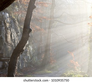 Foggy Sun rays hitting trees and illuminating woody path