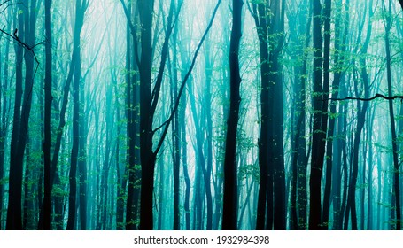 Foggy, sunny morning in summer forest. Fantasy forest. - Shutterstock ID 1932984398
