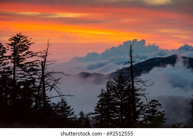 Foggy Sunrise in Great Smoky Mountains National Park