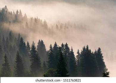 Foggy sunrise in a mountain forest. Beautiful Autumn Landscape.