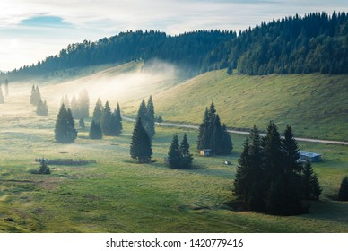 foggy sunrise in mountains. beautiful countryside scenery with sheep pasture. tall spruce trees on the meadow. road winding along the forested hills. cloudy sky. Balileasa valley, Apuseni, Romania