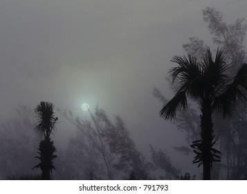 Foggy sunrise in tropical jungle setting